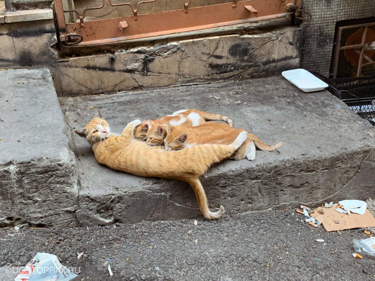 Котята пьют молоко матери