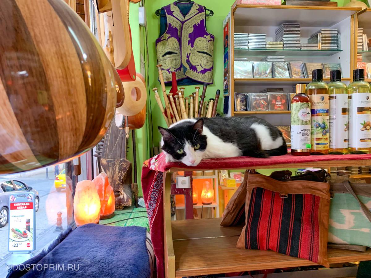 Кот лежит в магазине